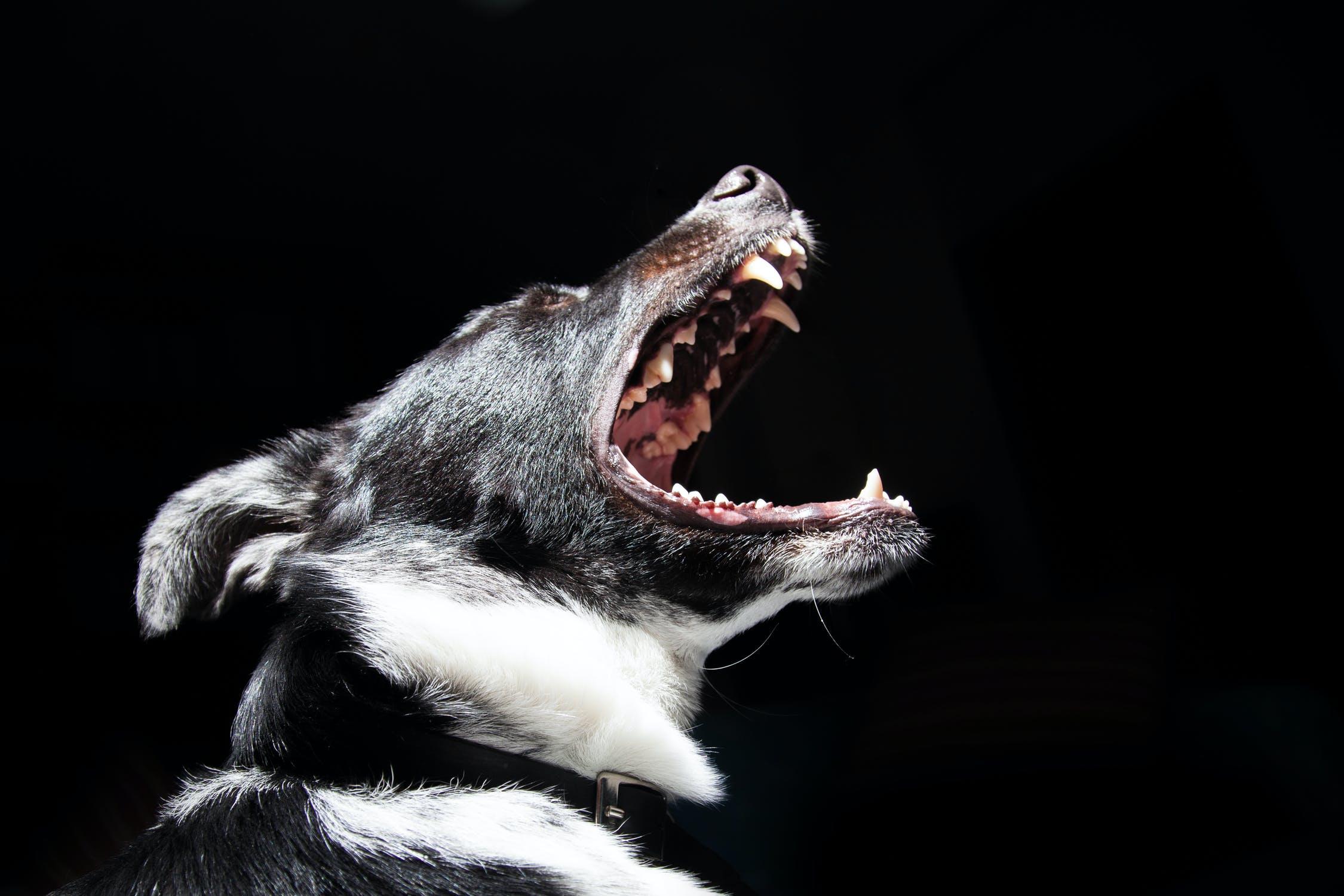Dog Bite Attorneys in Norcross GA